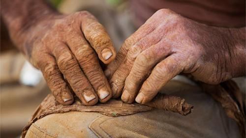 גלגול סיגרים. עבודת יד שנעשית על ידי מגלגלים מקצועיים. צילום: לירון שמעוני
