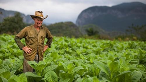 עמק ויניאלס שבמחוז פינאר דל ריו נודע בזכות הטבק האיכותי המיוצר בו. צילום: לירון שמעוני