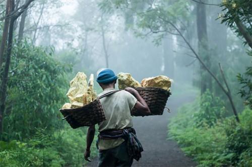 כורה נושא על כתפיו סלי במבוק עם גושי גופרית | צילום: גליה גוטמן