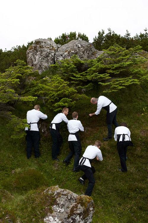 צוות המסעדה מלקט עשבים מקומיים   צילום: Claes Bech Poulsen