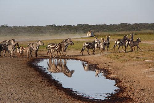 ספארי בטנזניה. צילום: רויטל חורש