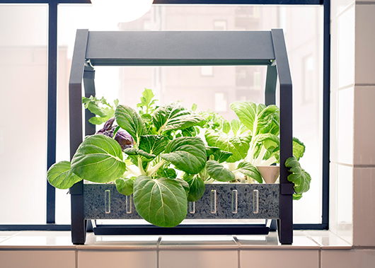 מעכשיו תוכלו לגדל ירקות וצמחים בתוך הבית, ללא צורך באור שמש או באדמה
