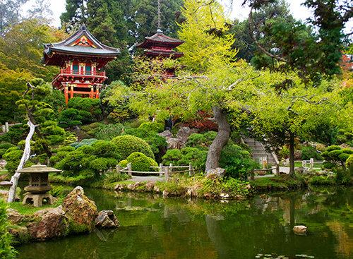 גן התה היפני המסורתי | צילום: shutterstock