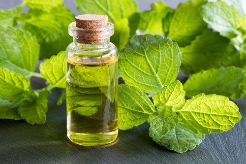 צמחי מרפא שמחזקים את מערכת החיסון: שמן אתרי ממיצוי צמח המליסה | צילום: שאטרסטוק