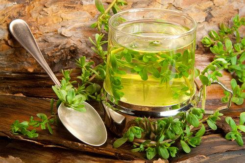צמחי מרפא שמחזקים את מערכת החיסון: תה ממיצוי צמח הבקופה | צילום: שאטרסטוק